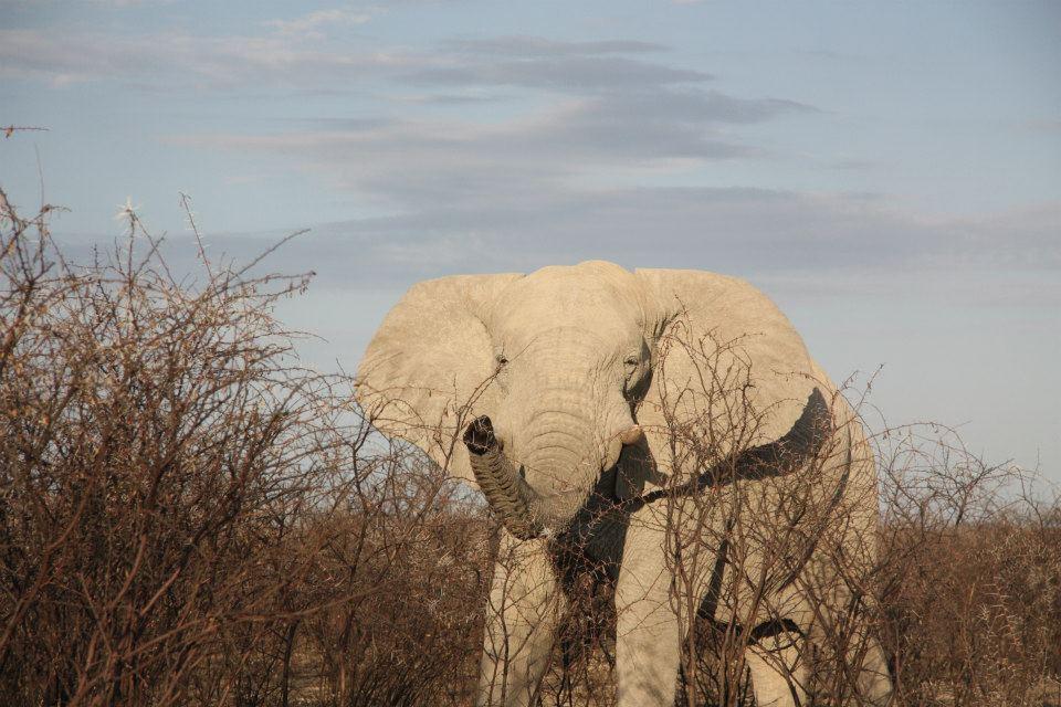 ... som hurtigt blev til helsur elefant, som foranledigede en gang interval løbetræning.