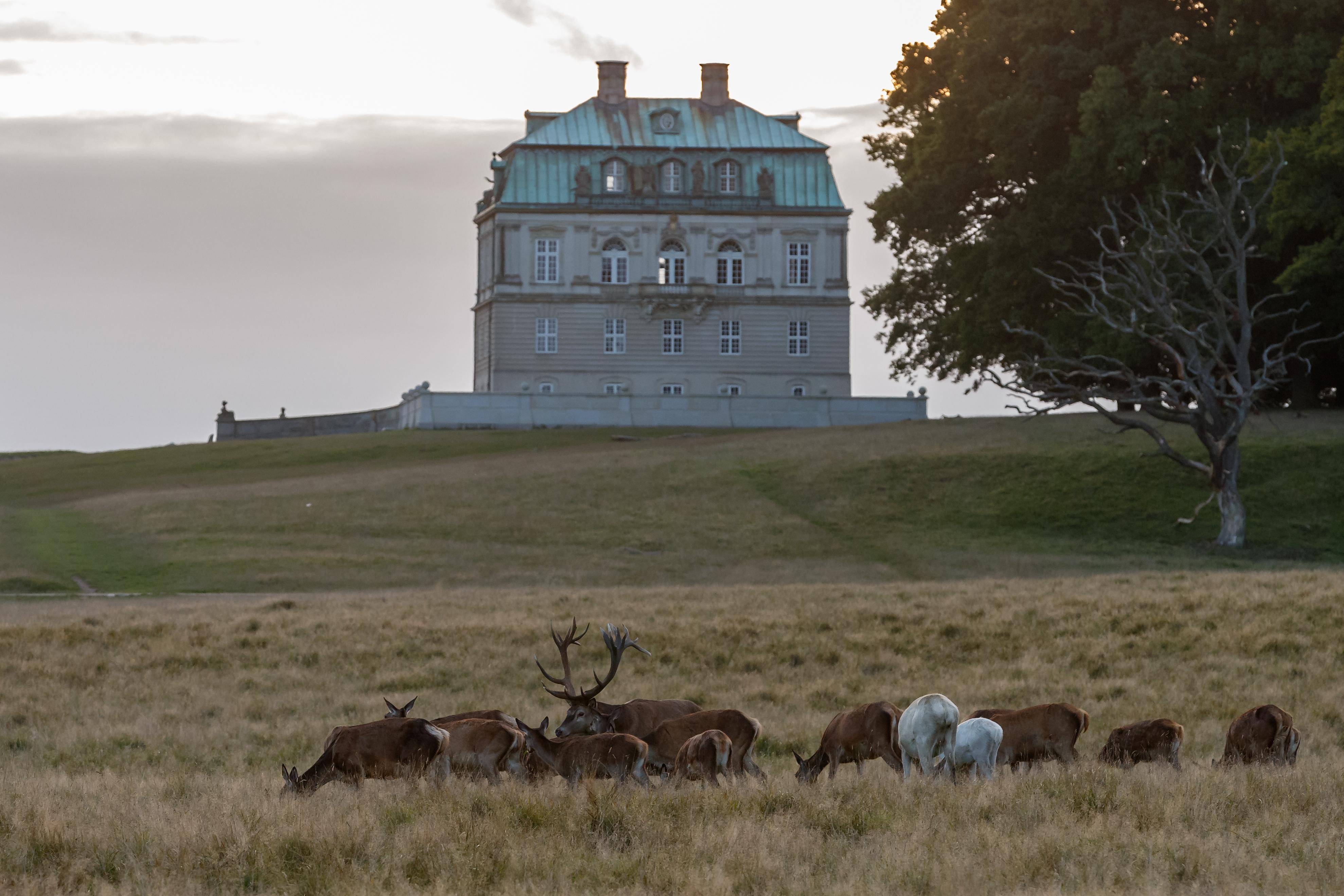 hjorte eremitage slottet